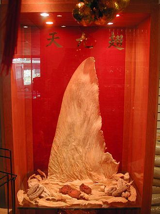 Wildlife trade - Shark fin for sale in Hong Kong