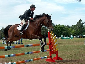 Grand Prix horse jumping