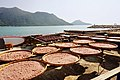 Shrimp paste manufacturing in Tai O.jpg