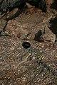 Sierra de Gredos 27-06-2010 19-06-37 2592x3888.jpg