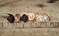 Silk Road 1992 (4367708373).jpg