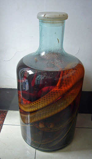 Snake wine - A bottle of snake wine photographed in the southern Chinese city of Guangzhou