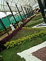 Snap from Lalbagh Flower Show Aug 2013 8355.JPG
