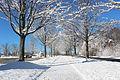 Snowing 040.JPG