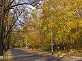 Sopot 23 Marca jesien.jpg