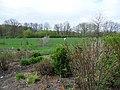 Southwest (Hemerocallis in the garden).jpg