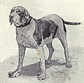 Spanish Pointer from 1915.JPG