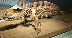 Resultado de imagen de sphenacodon