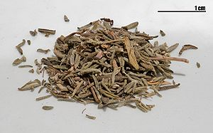 Dried thyme (Thymus vulgaris). This is a focus...