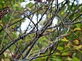Spider web (Newark, Ohio, USA) 3 (31169062330).jpg