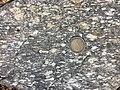 Spitzer Granodioritgneis sl10.jpg