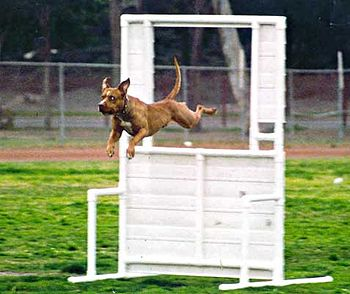 Love the agility programs?  Check out Westminster, Colorado