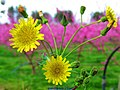 Spring Flowers (249639723).jpeg