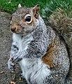Squirrel (49483682743).jpg