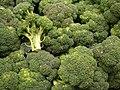 Starr-070730-7887-Brassica oleracea var botrytis-florets-Foodland Pukalani-Maui (24595065560).jpg
