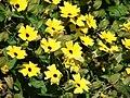 Starr-080219-2903-Thunbergia alata-yellow flowers-Enchanting Floral Gardens of Kula-Maui (24811307391).jpg