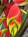 Starr-090617-1018-Heliconia rostrata-flowers-Haiku-Maui (24872057931).jpg