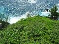 Starr 060422-7780 Pluchea carolinensis.jpg