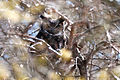 Stealthy Owl (4376972350).jpg