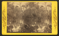 Steamer Osceola. Oklawaha River, Fla, from Robert N. Dennis collection of stereoscopic views.png