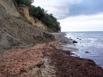 Wash margin - Two successive wash margins (centre and below right) comprising seaweed and eelgrass.