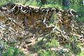 Steinbruch Betzenbuckel.jpg