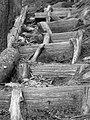 Steps (B&W) (2912770275).jpg