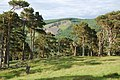 Stobo Quarry from Westhill Wood - geograph.org.uk - 842168.jpg
