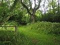 Stockton Wood near Stockton - geograph.org.uk - 504255.jpg