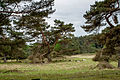 Stoerkathener-Heide Kellinghusen SH (44).jpg