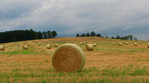 New Tecumseth - Straw bales near Alliston