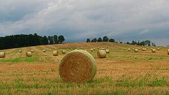 New Tecumseth - Straw bales near Alliston