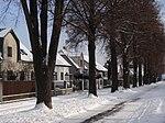 Suchdol - stromořadí lip srdčitých v Gagarinově ulici na Budovci (18).jpg