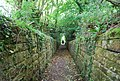 Sunken path at Somerhill - geograph.org.uk - 1354738.jpg