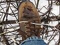 Survival snowshoes 7363.JPG