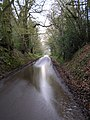 Sussex Sunken Lane - geograph.org.uk - 153009.jpg