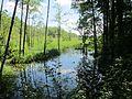 Suvieko sen., Lithuania - panoramio (24).jpg
