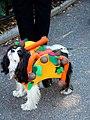 Taco dog (1796324549).jpg
