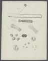 Taenia elliptica - - Print - Iconographia Zoologica - Special Collections University of Amsterdam - UBAINV0274 105 19 0019A.tif