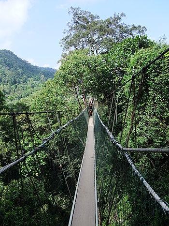 English: Canopy Walkway in the Taman Negara Na...