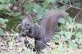 Tarnow Park Strzelecki wiewiorka 4.jpg