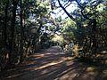 Tate Pine Grove 1.JPG