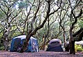 Tents under trees First Landing Campground (7818010674).jpg