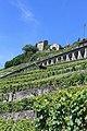 Terrasses de Lavaux - panoramio (70).jpg
