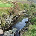 The Afon Tywi near Dolgoch Hostel, Ceredigion - geograph.org.uk - 1497730.jpg