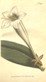 The Botanical Magazine, Plate 286 (Volume 8, 1794).png