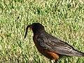 The Early Bird... (165702619).jpg