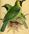 The Ibis (1889) (14563485127).jpg