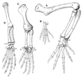The Osteology of the Reptiles p174.png