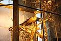 The State Hermitage Museum, Saint Petersburg, Russia (24033708957).jpg
